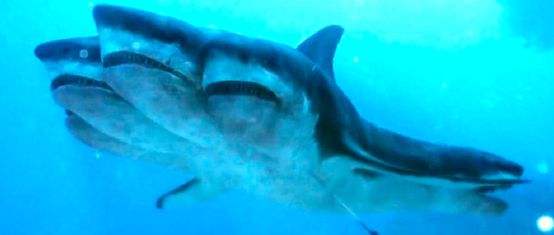 El ataque del tiburón de cinco cabezas